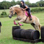 ecuries d'oré valorisation élevage poneys de sport